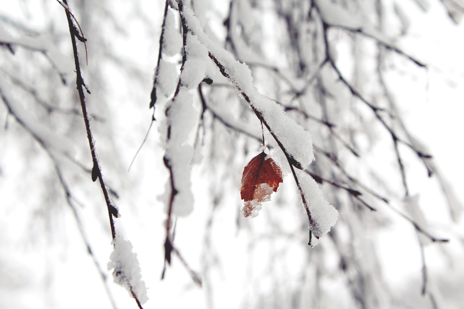 snow-1148773_1920